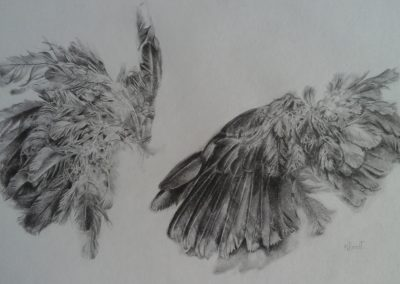 Nonnie Roodt - Wings