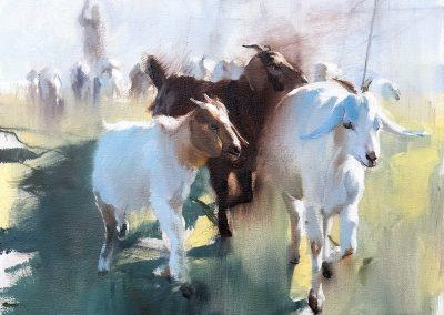 Urban Herd